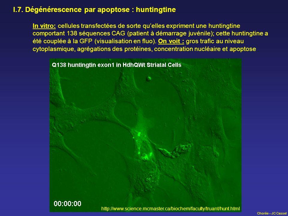 Chorée – JC Cassel I.7. Dégénérescence par apoptose : huntingtine In vitro: cellules transfectées de sorte quelles expriment une huntingtine comportan