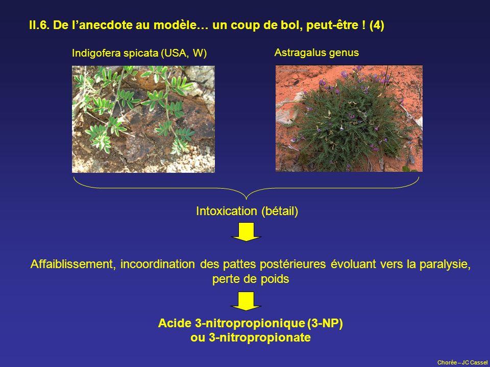 Chorée – JC Cassel II.6. De lanecdote au modèle… un coup de bol, peut-être ! (4) Indigofera spicata (USA, W) Astragalus genus Intoxication (bétail) Af
