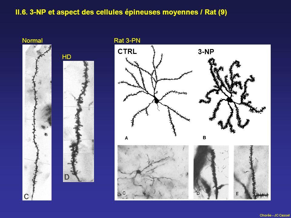 Chorée – JC Cassel II.6. 3-NP et aspect des cellules épineuses moyennes / Rat (9) Normal HD Rat 3-PN CTRL 3-NP