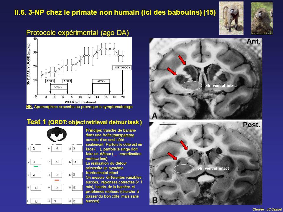 Chorée – JC Cassel II.6. 3-NP chez le primate non humain (ici des babouins) (15) NB. Apomorphine exacerbe ou provoque la symptomatologie Protocole exp