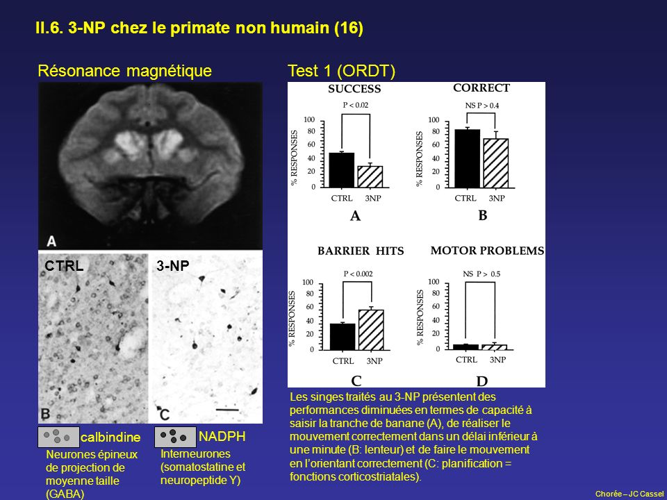 Chorée – JC Cassel II.6. 3-NP chez le primate non humain (16) Résonance magnétique calbindine NADPH Neurones épineux de projection de moyenne taille (