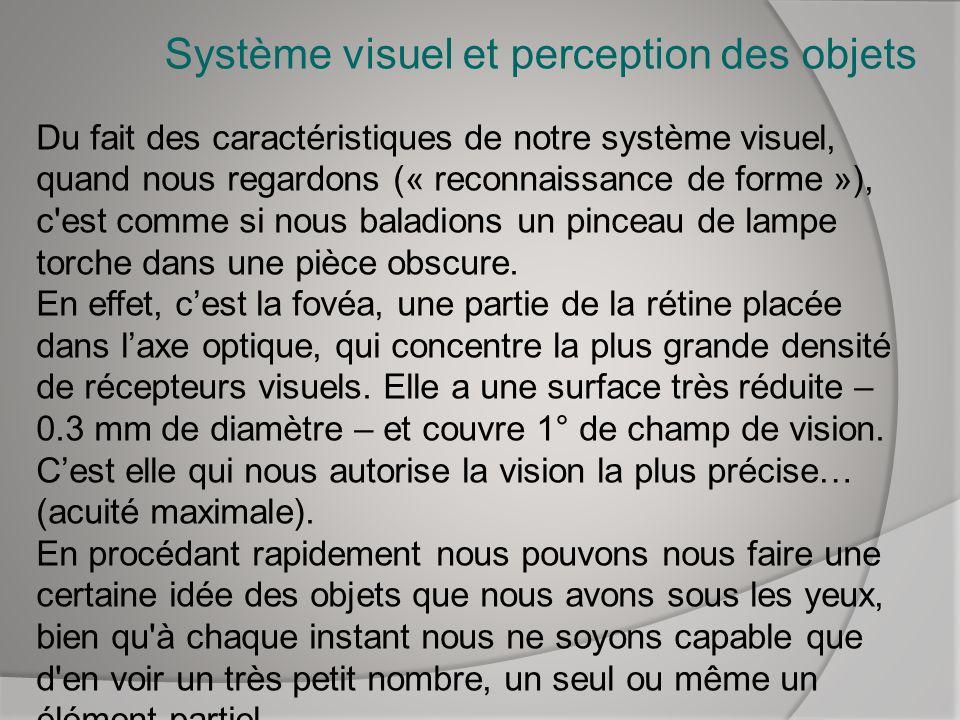 Système visuel et perception des objets Du fait des caractéristiques de notre système visuel, quand nous regardons (« reconnaissance de forme »), c'es