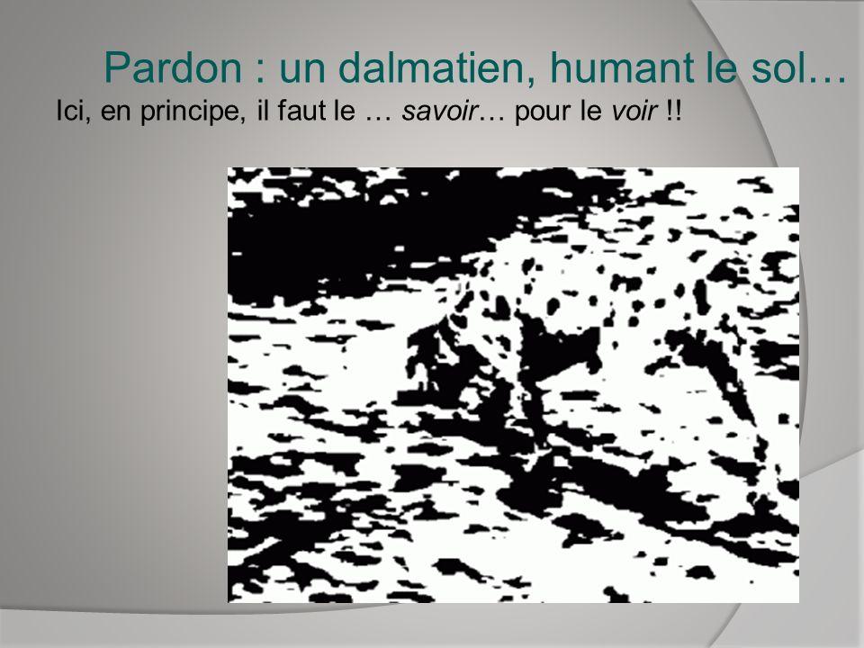 Pardon : un dalmatien, humant le sol… Ici, en principe, il faut le … savoir… pour le voir !!