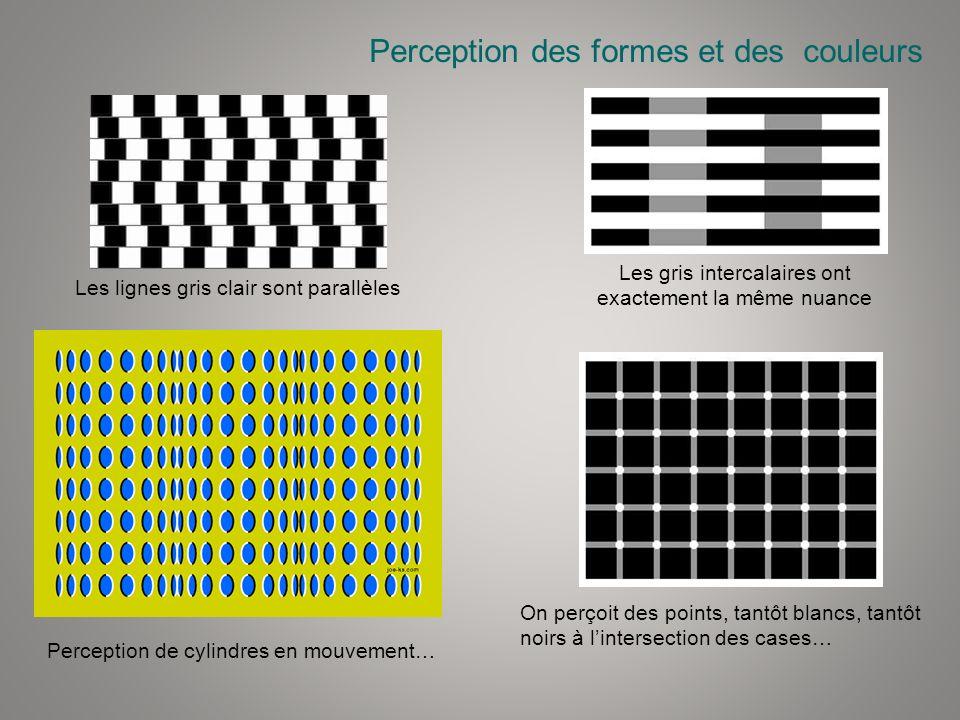 Perception des formes et des couleurs Les lignes gris clair sont parallèles Les gris intercalaires ont exactement la même nuance On perçoit des points