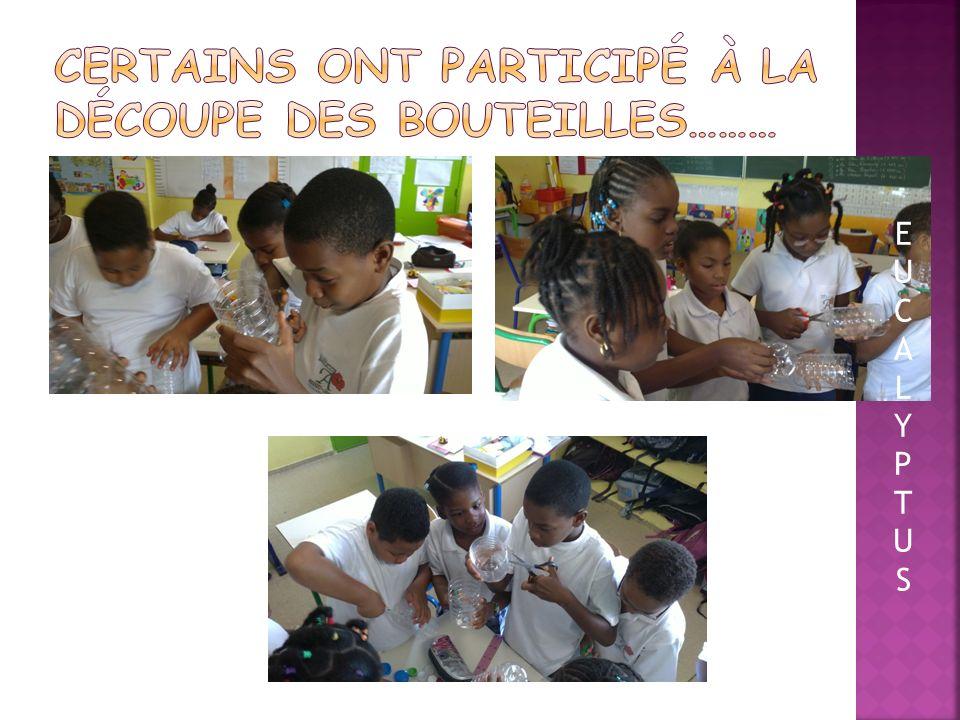 Nous avons utilisé le matériel suivant: Des bouteilles en plastique De la terre végétale Du terreau Tout le monde a mis la main à la pâte…. EUCALYPTUS