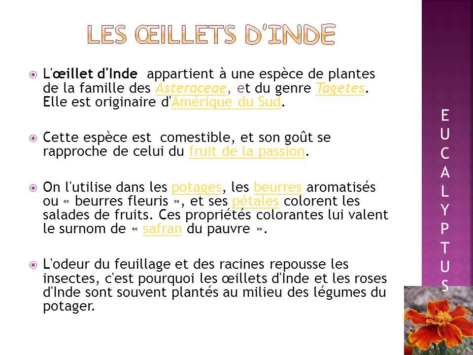 Le terme piment est un fruit pouvant être vert, jaune, orange ou rouge.. Il est à noter qu au Canada, le terme piment est parfois utilisé de manière r