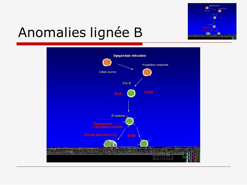 Anomalies lignée B