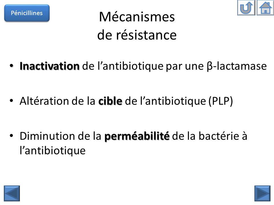 Mécanismes de résistance Inactivation Inactivation de lantibiotique par une β-lactamase cible Altération de la cible de lantibiotique (PLP) perméabili