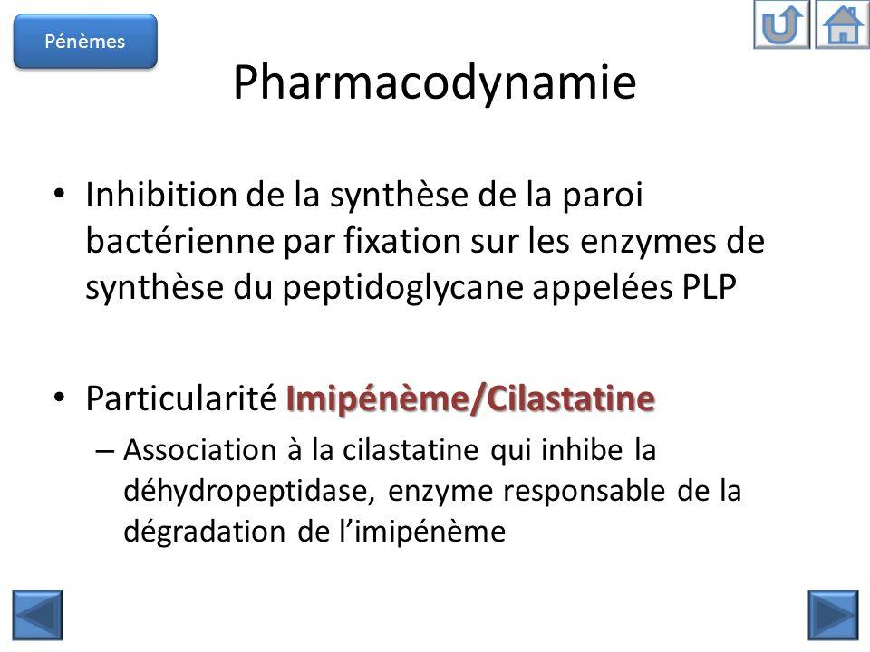 Pharmacodynamie Inhibition de la synthèse de la paroi bactérienne par fixation sur les enzymes de synthèse du peptidoglycane appelées PLP Imipénème/Ci