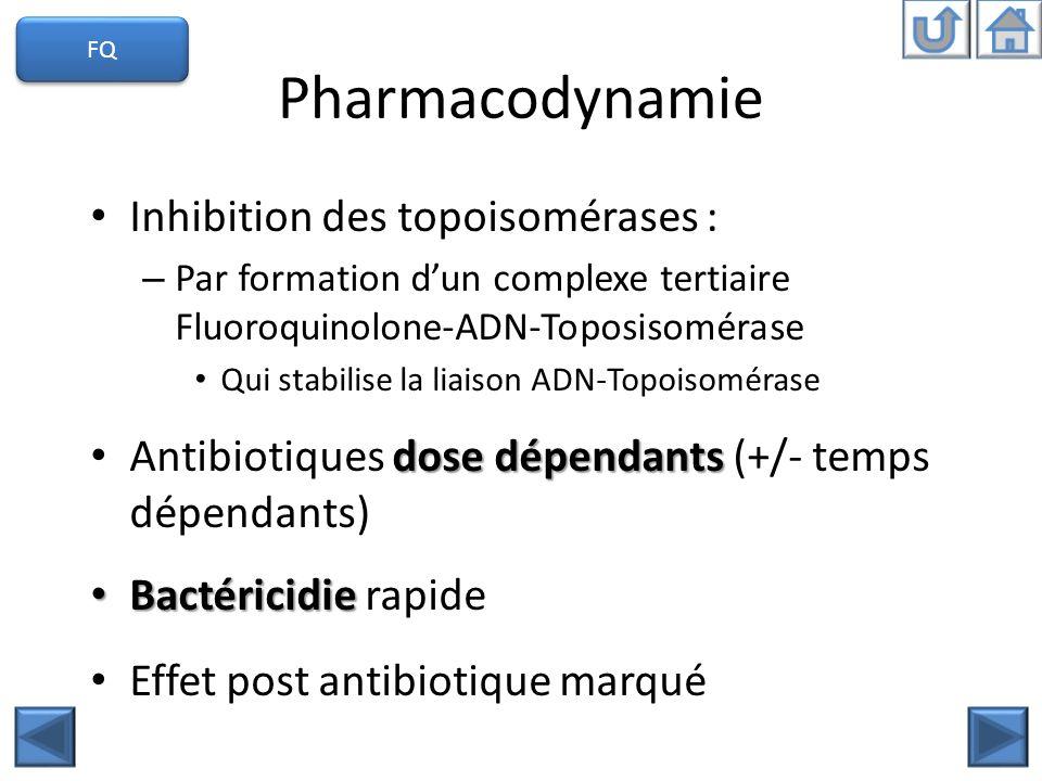 Pharmacodynamie Inhibition des topoisomérases : – Par formation dun complexe tertiaire Fluoroquinolone-ADN-Toposisomérase Qui stabilise la liaison ADN
