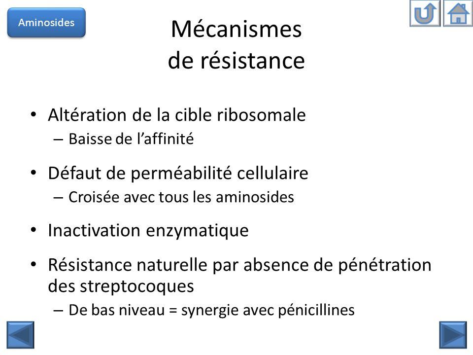 Mécanismes de résistance Altération de la cible ribosomale – Baisse de laffinité Défaut de perméabilité cellulaire – Croisée avec tous les aminosides
