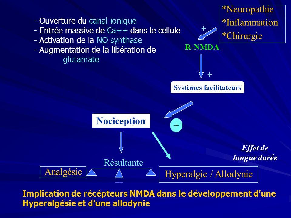 *Neuropathie *Inflammation *Chirurgie Systèmes facilitateurs Nociception + + Résultante Analgésie Hyperalgie / Allodynie R-NMDA + Effet de longue durée Implication de récépteurs NMDA dans le développement dune Hyperalgésie et dune allodynie - Ouverture du canal ionique - Entrée massive de Ca++ dans le cellule - Activation de la NO synthase - Augmentation de la libération de glutamate