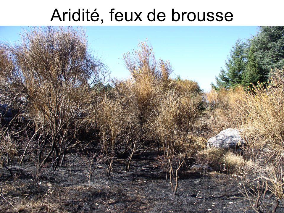 Aridité, feux de brousse