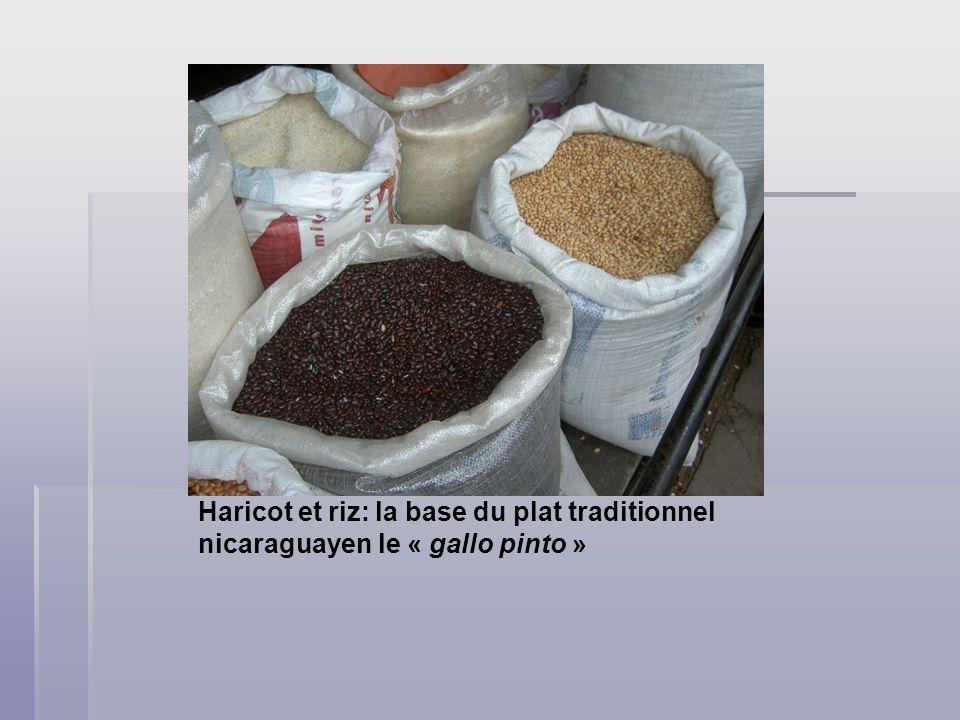 Haricot et riz: la base du plat traditionnel nicaraguayen le « gallo pinto »