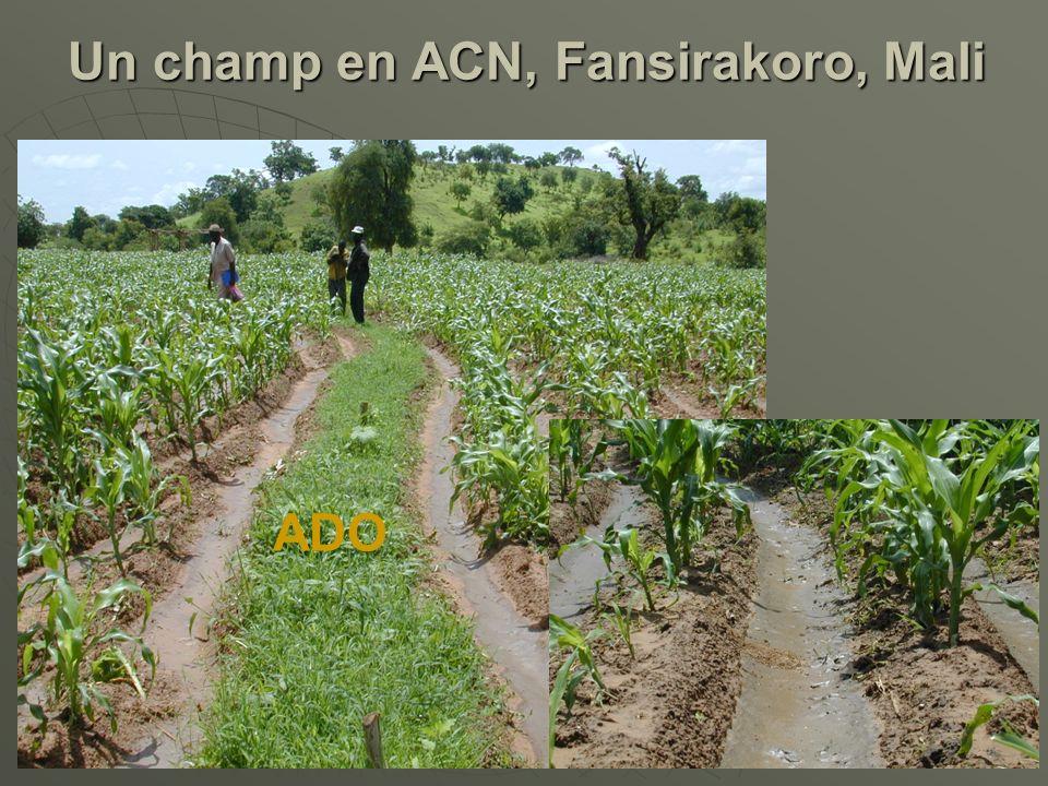 ADO Un champ en ACN, Fansirakoro, Mali Un champ en ACN, Fansirakoro, Mali