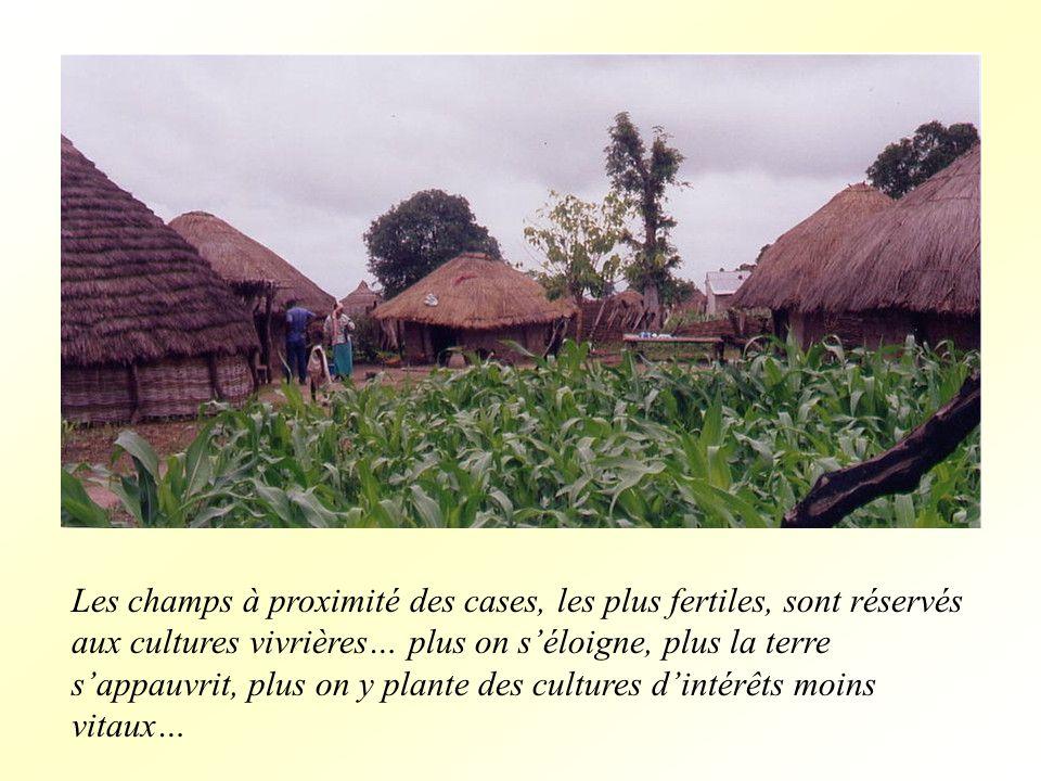 Les champs à proximité des cases, les plus fertiles, sont réservés aux cultures vivrières… plus on séloigne, plus la terre sappauvrit, plus on y plante des cultures dintérêts moins vitaux…