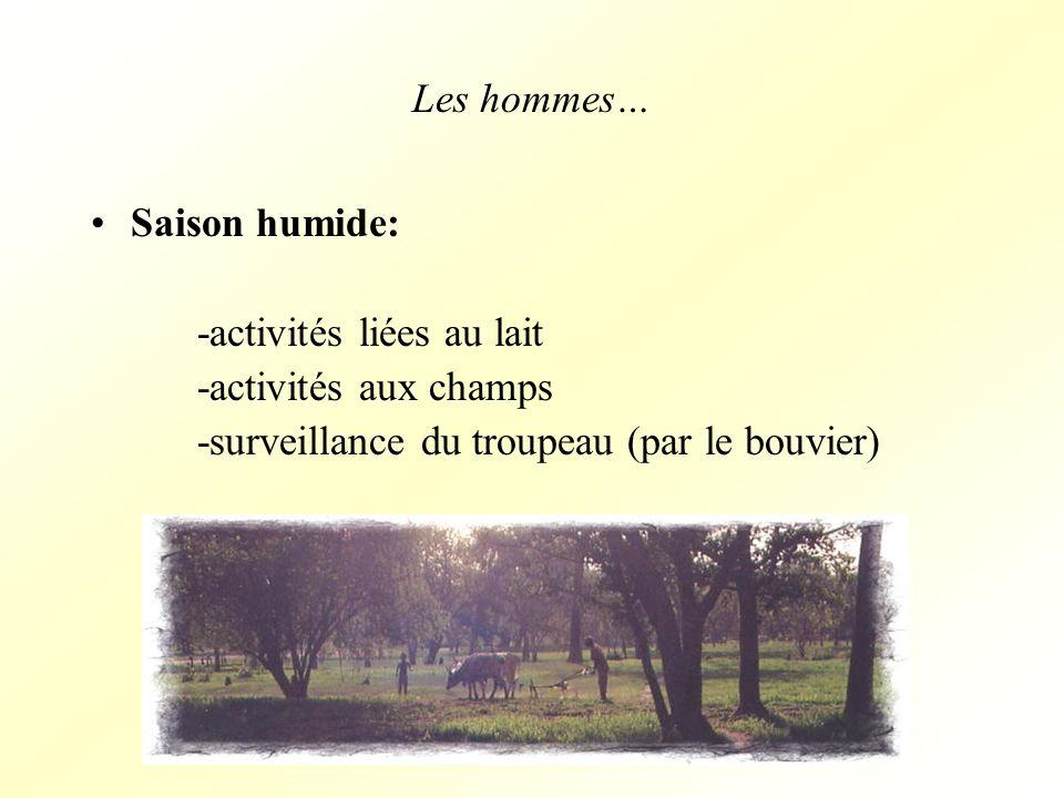 Les hommes… Saison humide: -activités liées au lait -activités aux champs -surveillance du troupeau (par le bouvier)