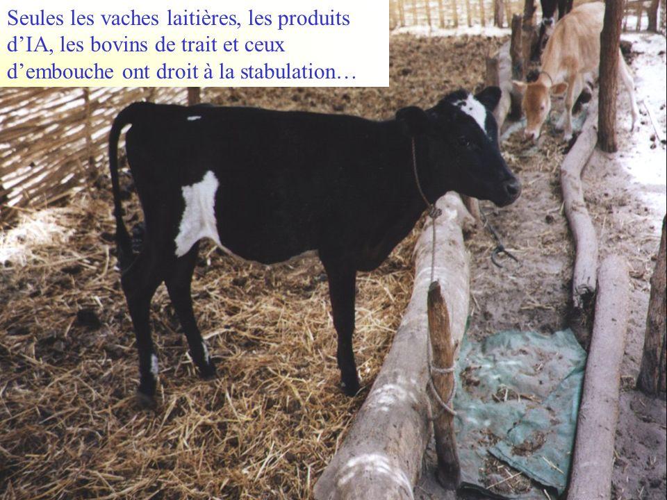 Seules les vaches laitières, les produits dIA, les bovins de trait et ceux dembouche ont droit à la stabulation…