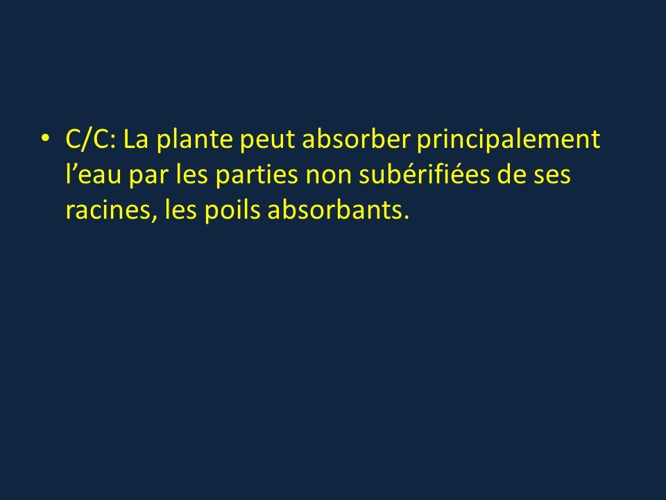 C/C: La plante peut absorber principalement leau par les parties non subérifiées de ses racines, les poils absorbants.
