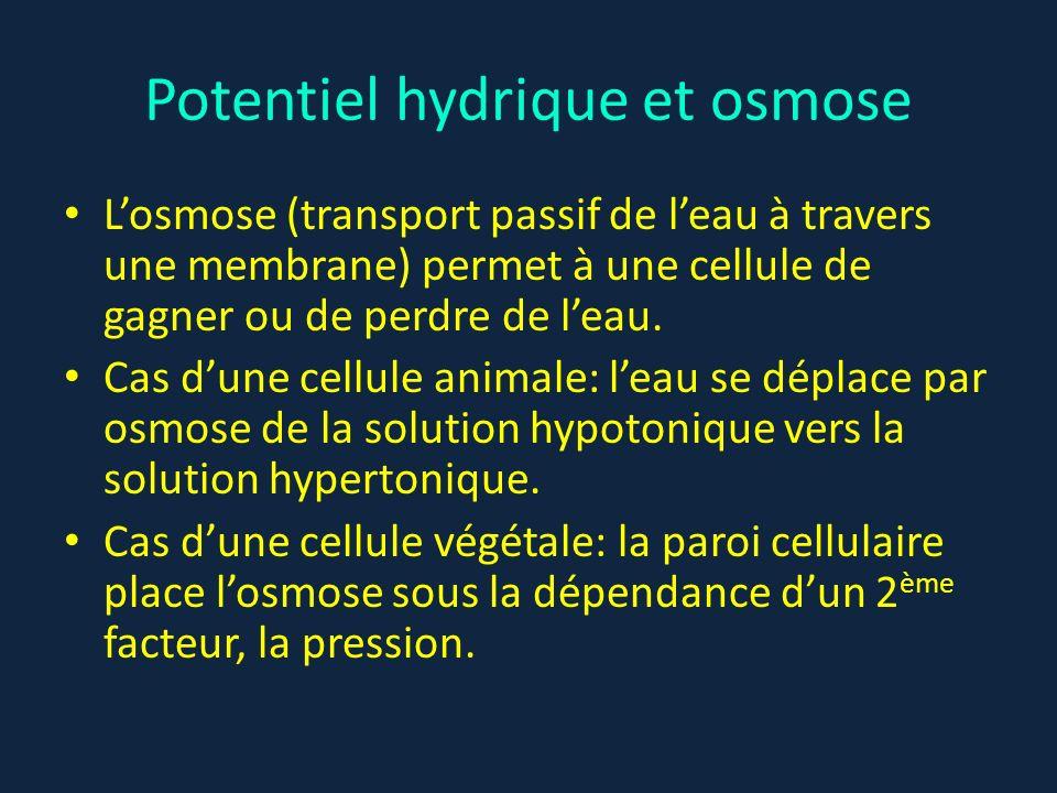 Potentiel hydrique et osmose Losmose (transport passif de leau à travers une membrane) permet à une cellule de gagner ou de perdre de leau. Cas dune c
