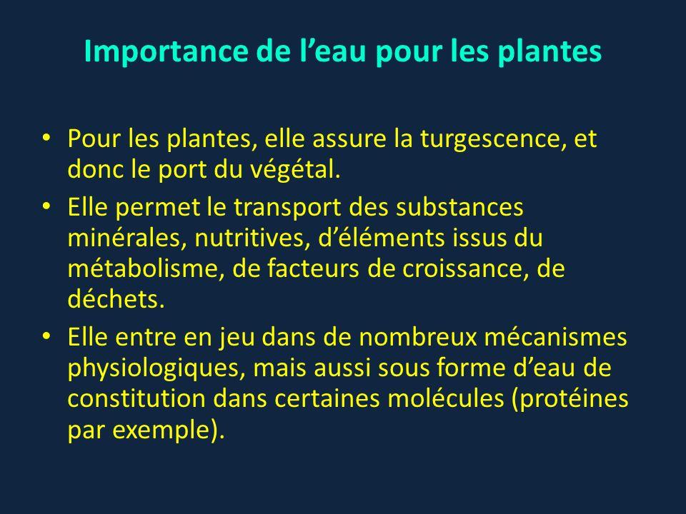 Pour les plantes, elle assure la turgescence, et donc le port du végétal. Elle permet le transport des substances minérales, nutritives, déléments iss