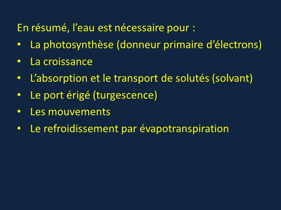 En résumé, leau est nécessaire pour : La photosynthèse (donneur primaire délectrons) La croissance Labsorption et le transport de solutés (solvant) Le