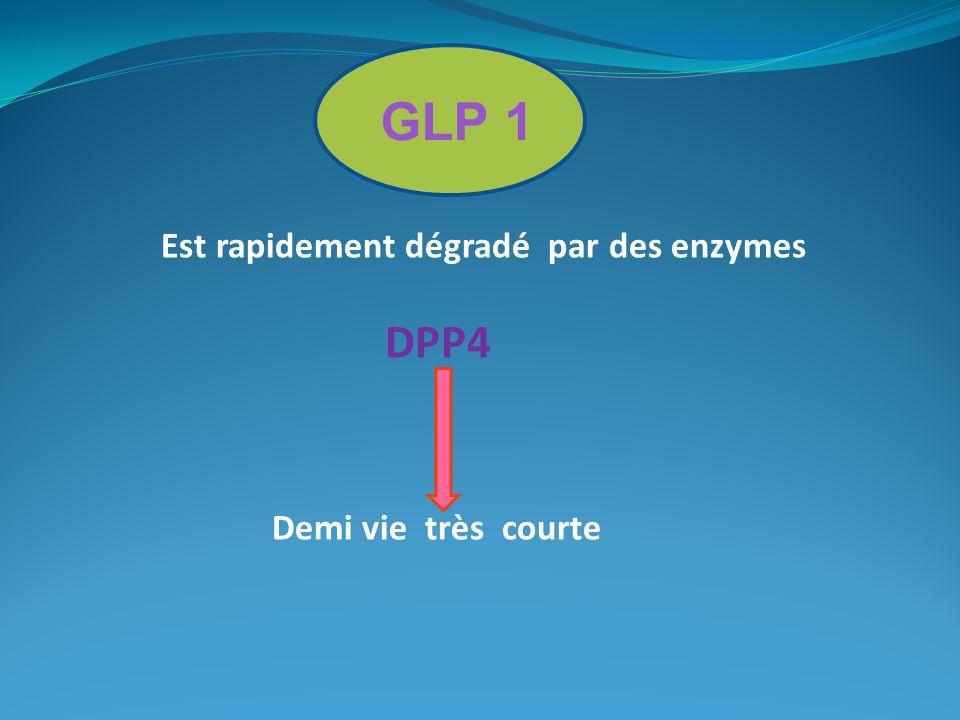 GLP 1 Est rapidement dégradé par des enzymes DPP4 Demi vie très courte