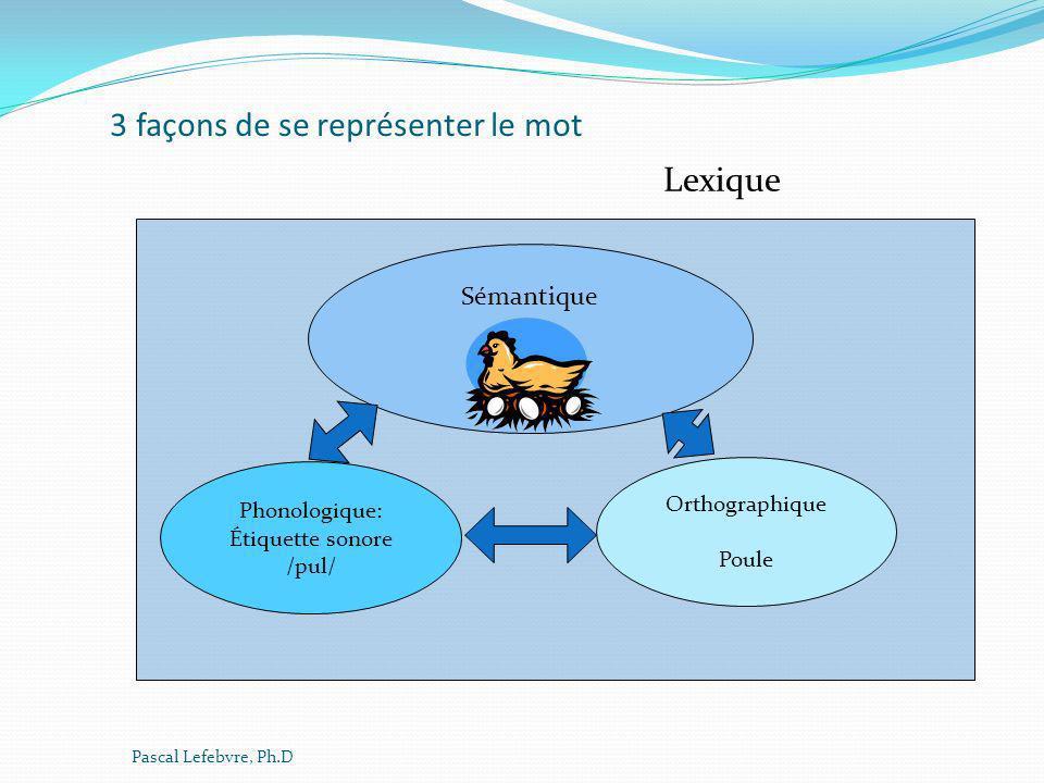 3 façons de se représenter le mot Phonologique: Étiquette sonore /pul/ Sémantique Orthographique Poule Lexique Pascal Lefebvre, Ph.D