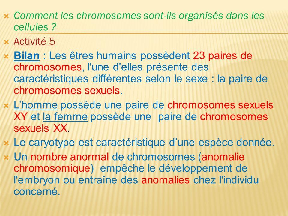 Comment les chromosomes sont-ils organisés dans les cellules .