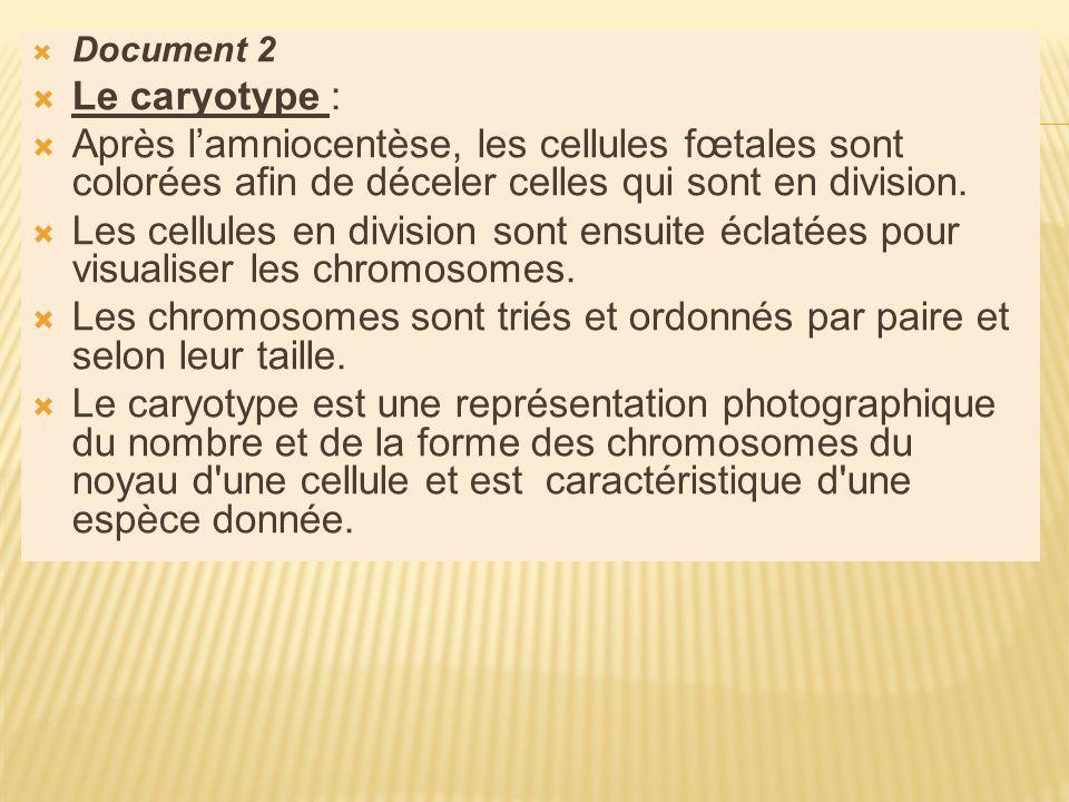 Document 2 Le caryotype : Après lamniocentèse, les cellules fœtales sont colorées afin de déceler celles qui sont en division.