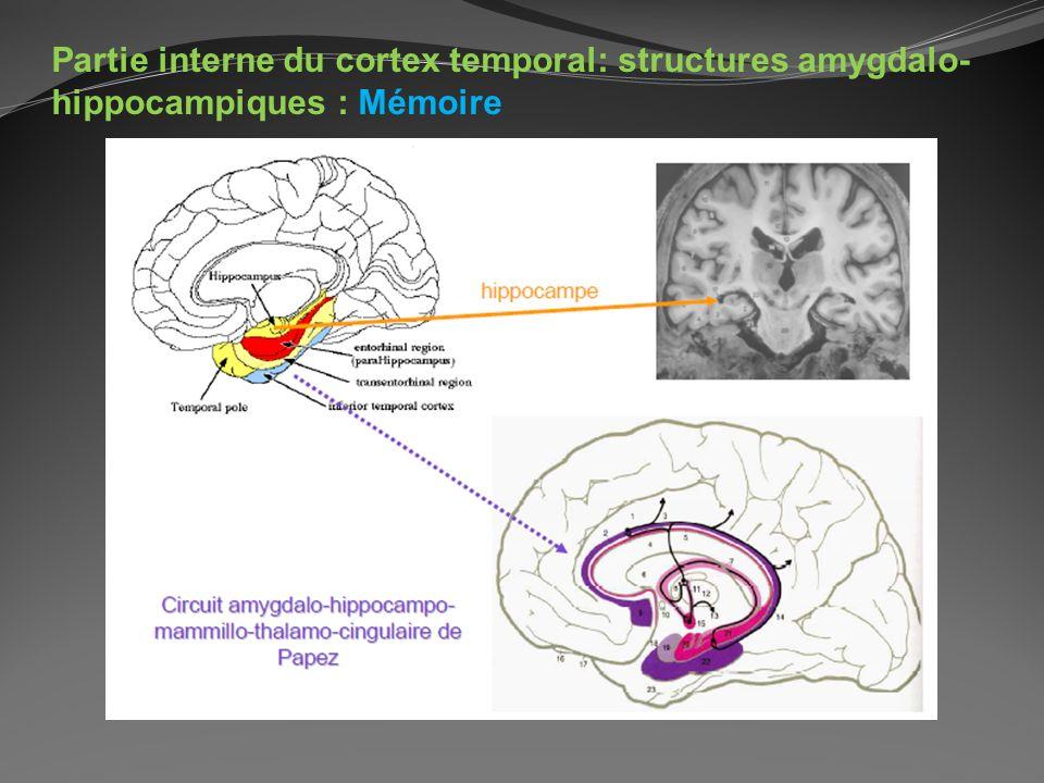 Partie interne du cortex temporal: structures amygdalo- hippocampiques : Mémoire