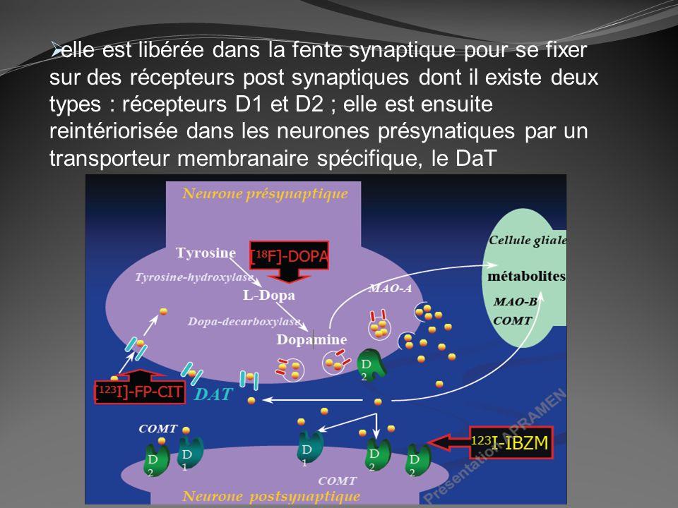 elle est libérée dans la fente synaptique pour se fixer sur des récepteurs post synaptiques dont il existe deux types : récepteurs D1 et D2 ; elle est