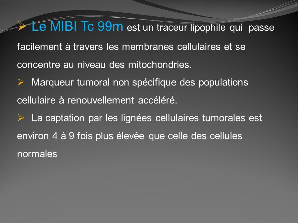 Le MIBI Tc 99m est un traceur lipophile qui passe facilement à travers les membranes cellulaires et se concentre au niveau des mitochondries. Marqueur