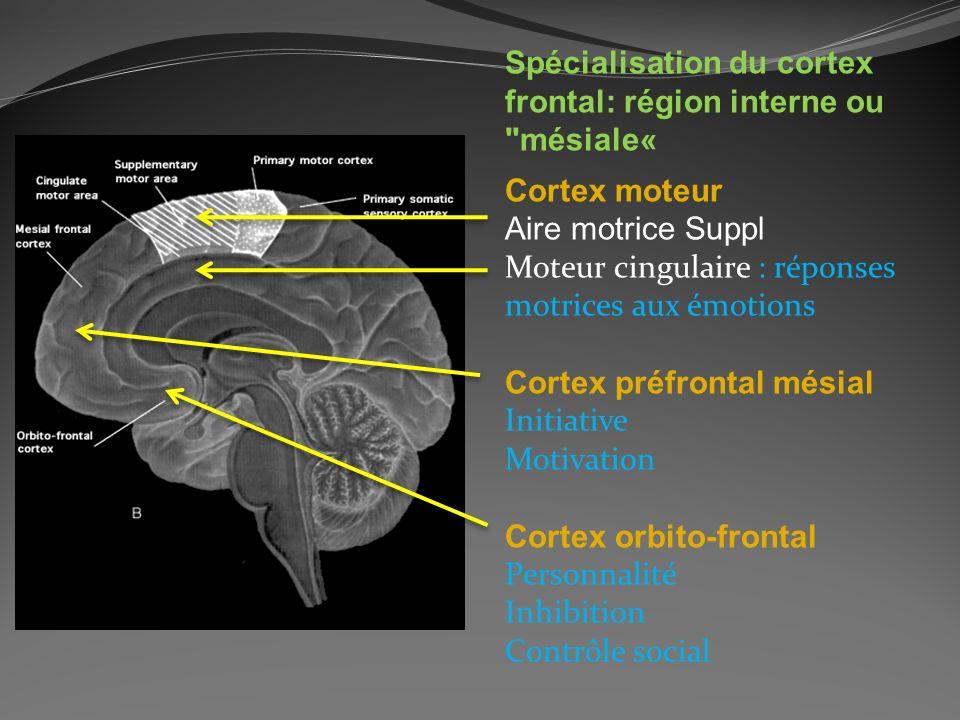 Spécialisation du cortex frontal: région interne ou