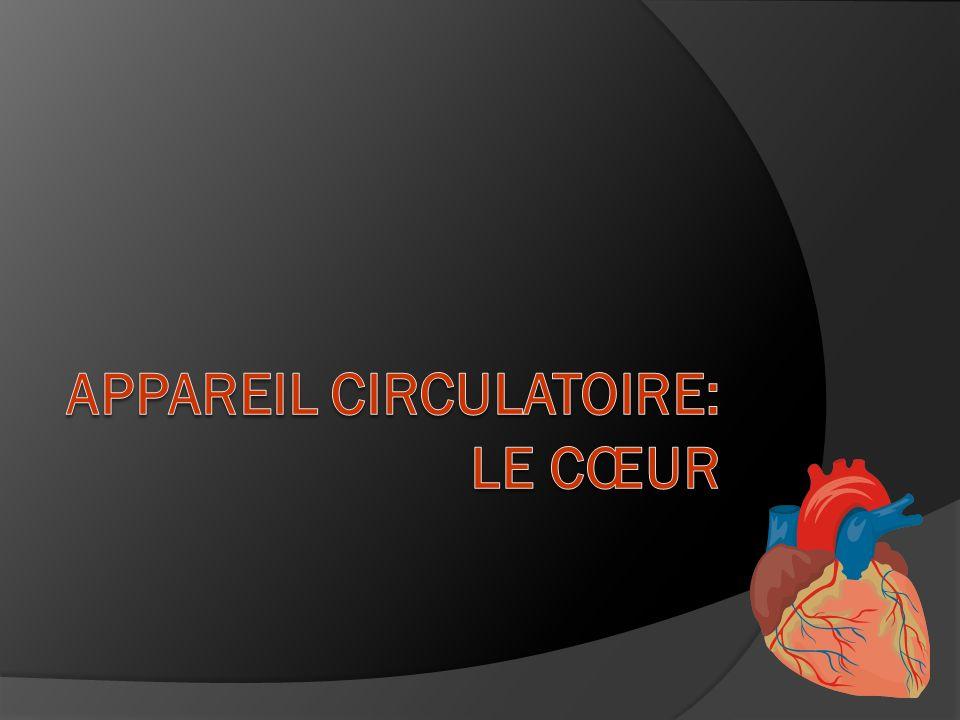 Sommaire Généralités - Organisation du système cardiovasculaire - Le débit cardiaque et les facteurs qui linfluencent Anatomie cardiaque - Morphologie - Le tissu nodal - L innervation cardiaque L activité mécanique cardiaque - La révolution cardiaque - Le jeu des valvules - Les pressions intracardiaques et les bruits du coeur Régulation de l activité cardiaque - Régulation du débit cardiaque - Réflexes régulant l activité cardiaque