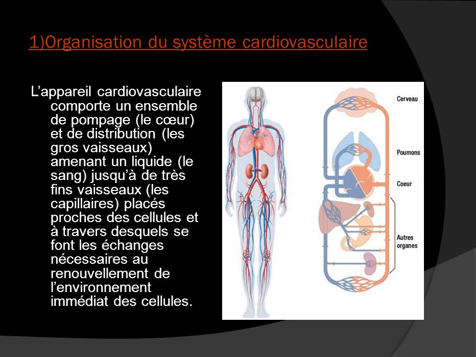 La nécessité de la circulation Lappareil cardiovasculaire a précisément pour fonction dassurer la liaison entre le milieu intérieur et le milieu extérieur par le transport du sang à tous nos organes, à chacune de nos cellules.