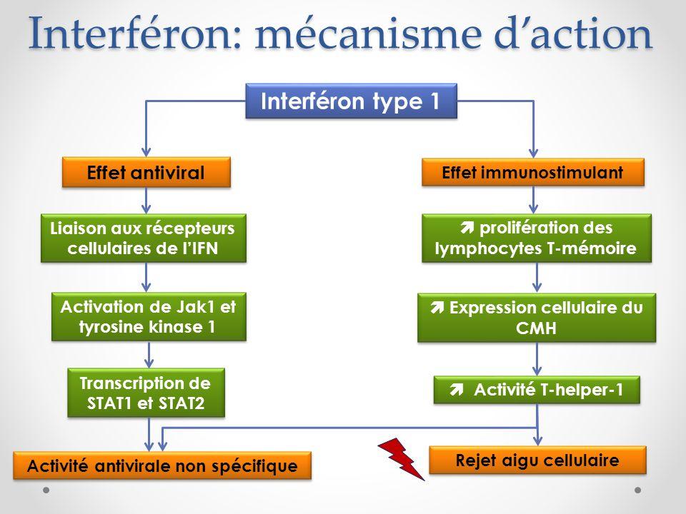 Interféron: mécanisme daction Interféron type 1 Effet antiviral Effet immunostimulant Liaison aux récepteurs cellulaires de lIFN Activation de Jak1 et tyrosine kinase 1 Transcription de STAT1 et STAT2 Activité antivirale non spécifique prolifération des lymphocytes T-mémoire Expression cellulaire du CMH Activité T-helper-1 Rejet aigu cellulaire