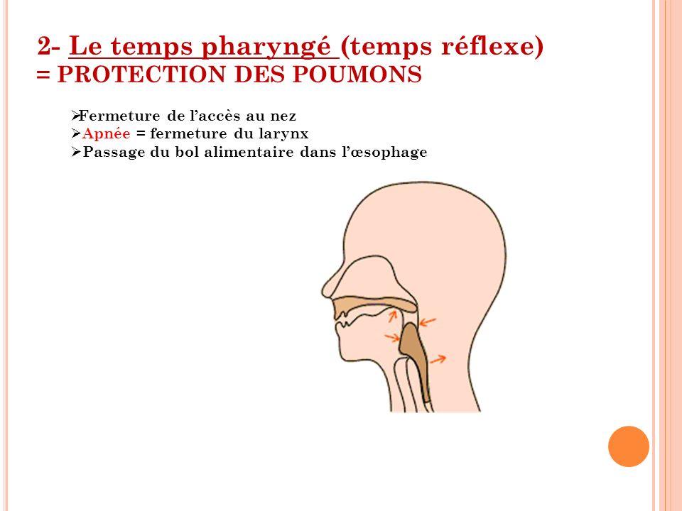 2- Le temps pharyngé (temps réflexe) = PROTECTION DES POUMONS Fermeture de laccès au nez Apnée = fermeture du larynx Passage du bol alimentaire dans l