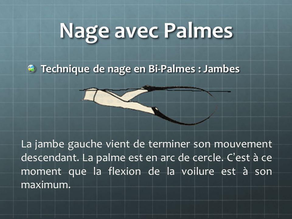 Nage avec Palmes Technique de nage en Bi-Palmes : Jambes La jambe gauche vient de terminer son mouvement descendant. La palme est en arc de cercle. Ce
