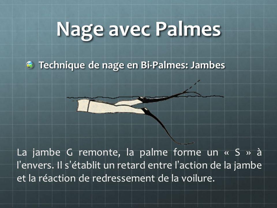Nage avec Palmes Technique de nage en Bi-Palmes: Jambes La jambe G remonte, la palme forme un « S » à lenvers. Il sétablit un retard entre laction de