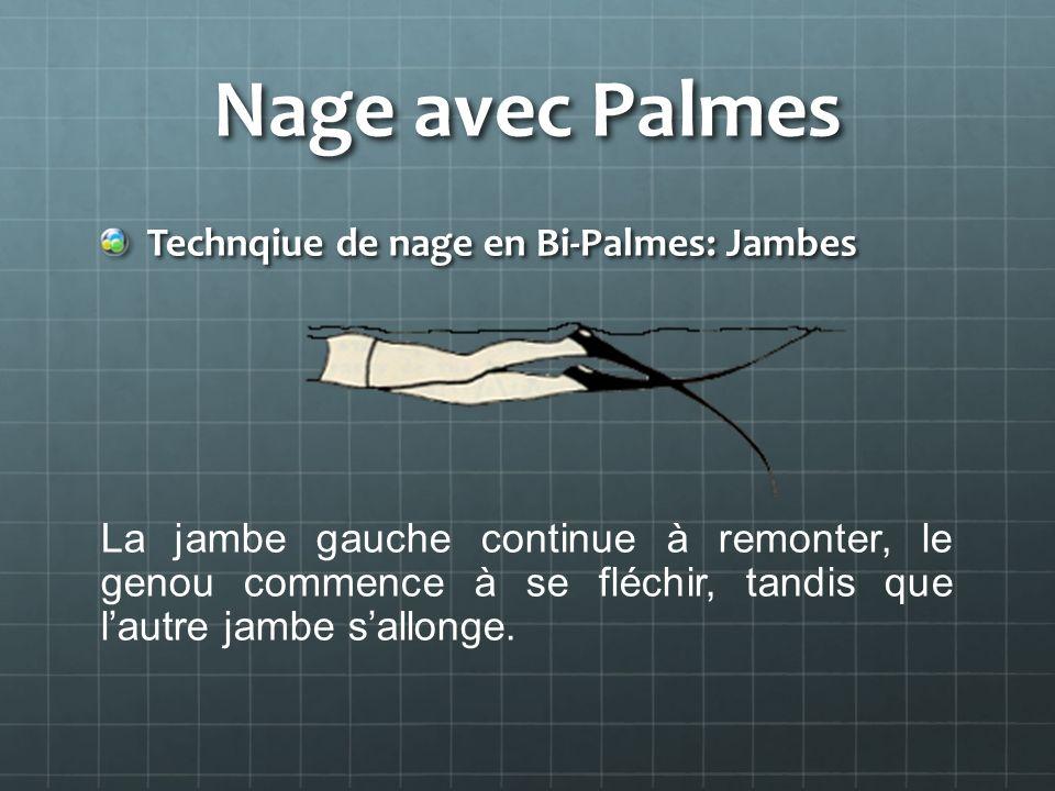 Nage avec Palmes Technqiue de nage en Bi-Palmes: Jambes La jambe gauche continue à remonter, le genou commence à se fléchir, tandis que lautre jambe s
