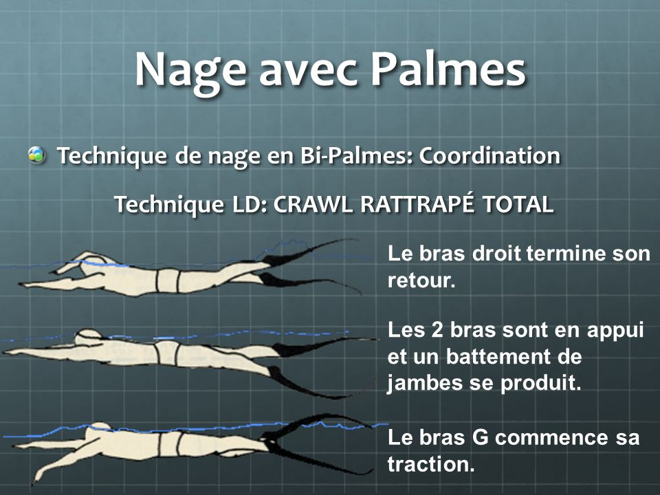 Nage avec Palmes Technique de nage en Bi-Palmes: Coordination Technique LD: CRAWL RATTRAPÉ TOTAL Technique LD: CRAWL RATTRAPÉ TOTAL Le bras droit term
