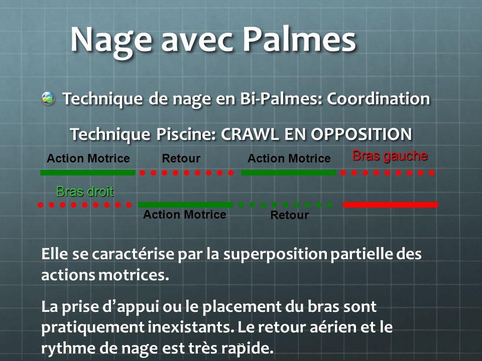 22 Nage avec Palmes Technique de nage en Bi-Palmes: Coordination Technique Piscine: CRAWL EN OPPOSITION Elle se caractérise par la superposition parti