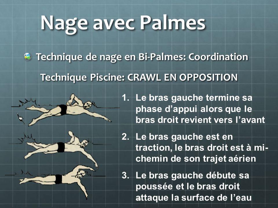 23 Nage avec Palmes Technique de nage en Bi-Palmes: Coordination Technique Piscine: CRAWL EN OPPOSITION 1.Le bras gauche termine sa phase dappui alors