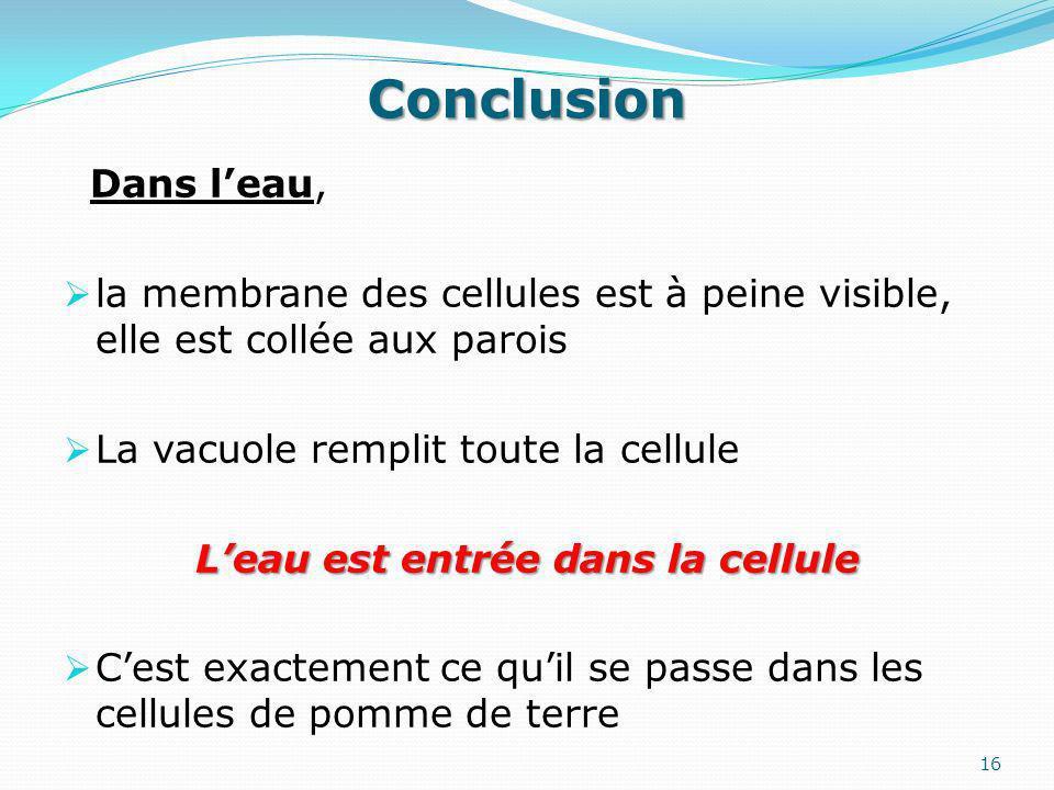 Conclusion Dans leau, la membrane des cellules est à peine visible, elle est collée aux parois La vacuole remplit toute la cellule Leau est entrée dans la cellule Cest exactement ce quil se passe dans les cellules de pomme de terre 16