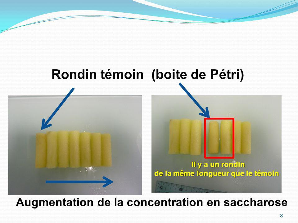 8 Rondin témoin (boite de Pétri) Augmentation de la concentration en saccharose Il y a un rondin de la même longueur que le témoin