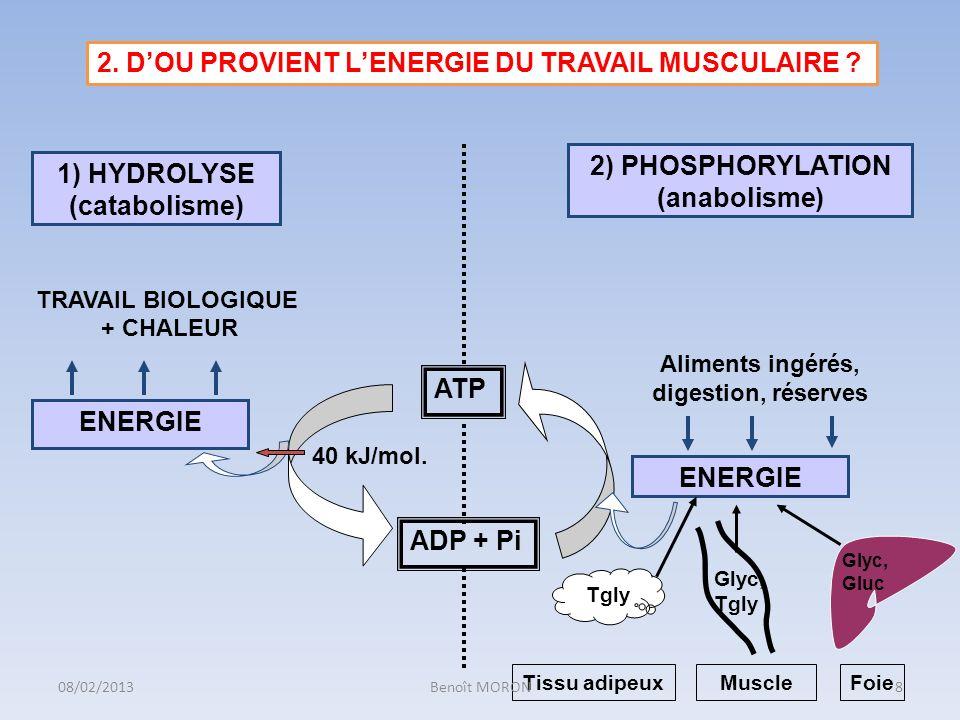 ENERGIE Aliments ingérés, digestion, réserves 1) HYDROLYSE (catabolisme) 2) PHOSPHORYLATION (anabolisme) TRAVAIL BIOLOGIQUE + CHALEUR ATP ADP + Pi 2.