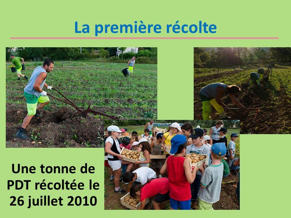 La première récolte Une tonne de PDT récoltée le 26 juillet 2010