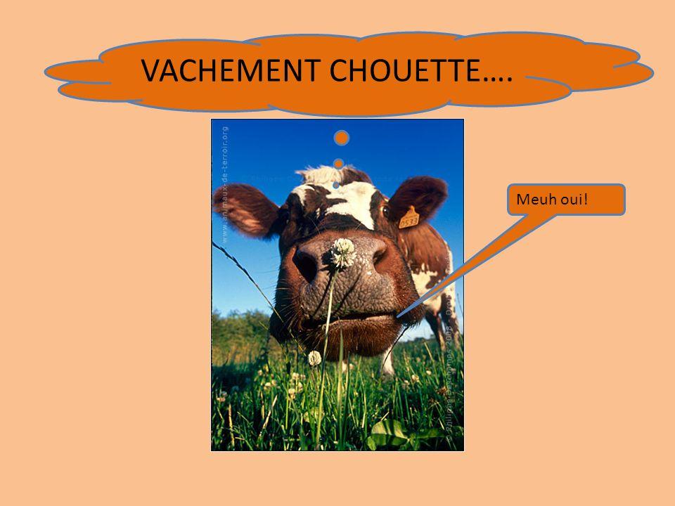 VACHEMENT CHOUETTE…. Meuh oui!