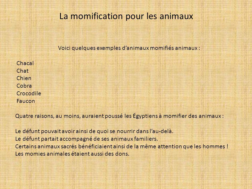 La momification pour les animaux Voici quelques exemples danimaux momifiés animaux : Chacal Chat Chien Cobra Crocodile Faucon Quatre raisons, au moins